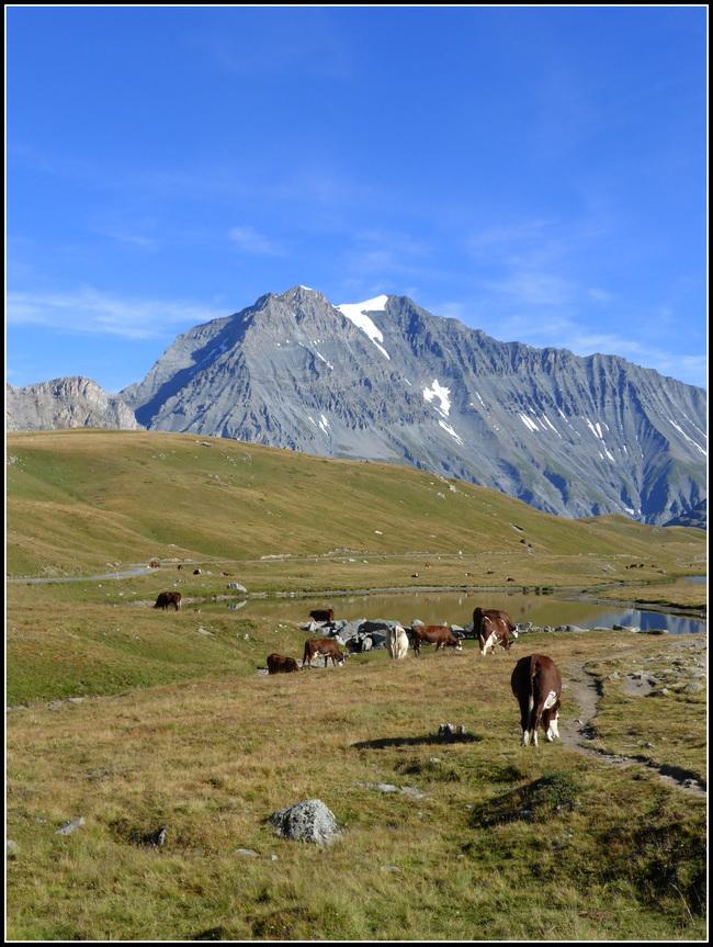 Fin du séjour en Haute-Maurienne été 2016 : Le Plan du lac.