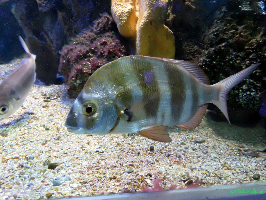l'aquarium du Croisic (44) -2