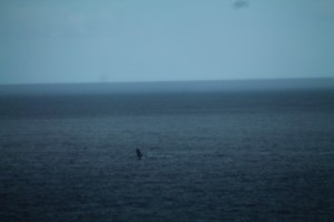 baleine 2881