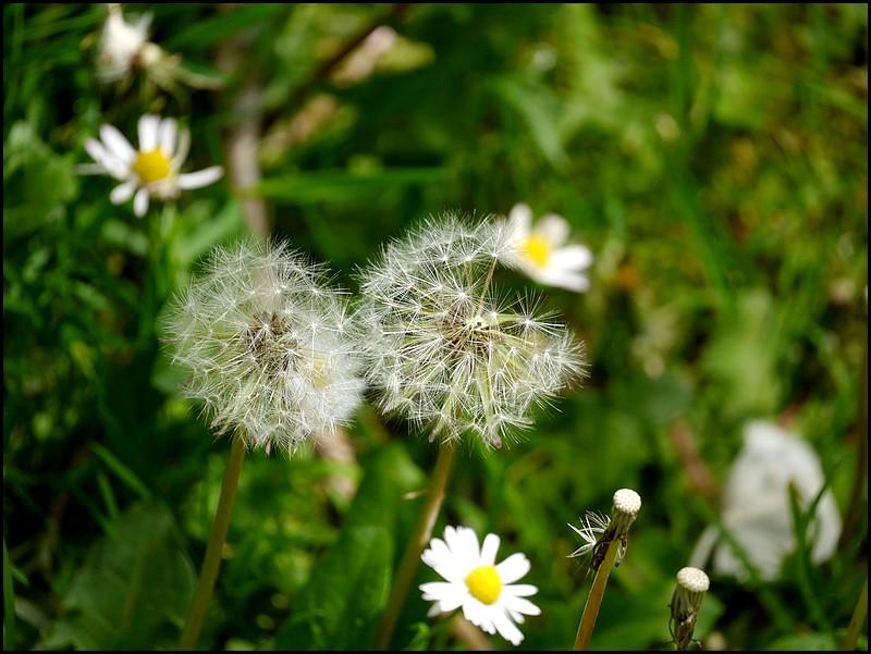 Quelques fleurs de saison