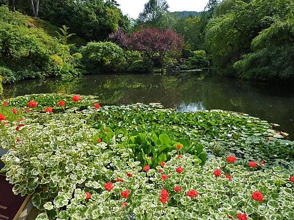 Jour 24 Butchart Gardens bassin
