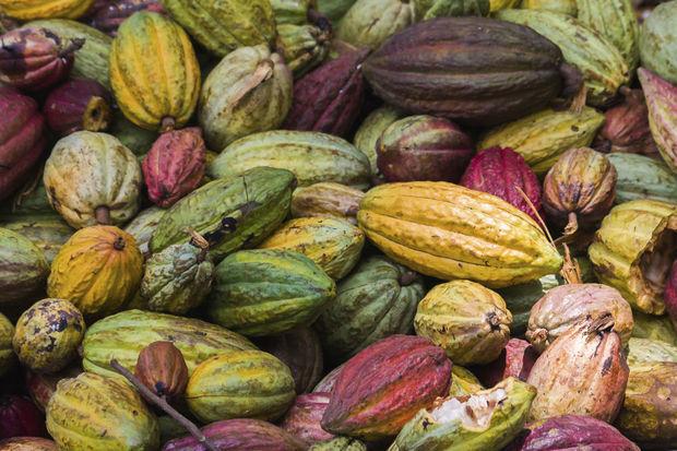 Le cacao pourrait freiner le déclin cognitif