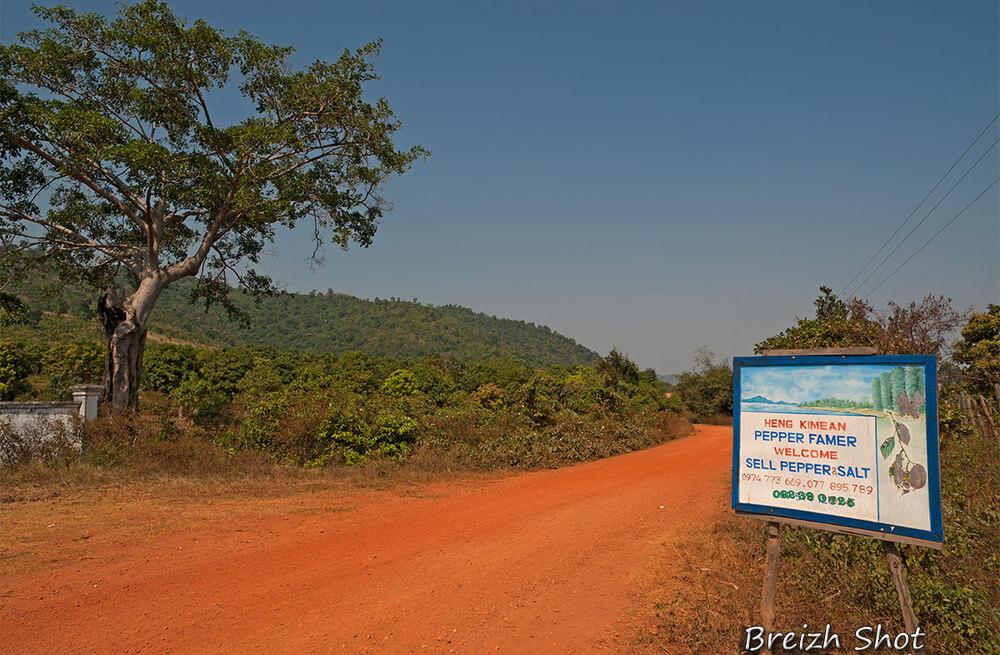 kampot - plantation de poivriers