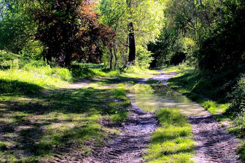 Portet sur Garonne: chemin aux reflets ...