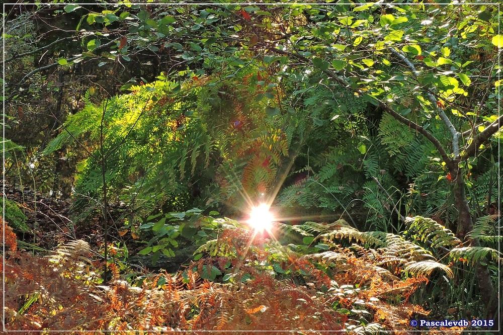 Automne au parc de la Chêneraie à la Hume - Octobre 2015 - 3/7