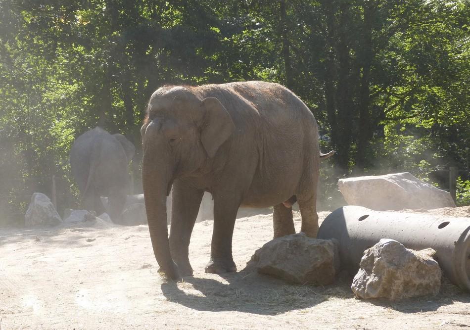 Un zoo en ville, c'est à Amiens