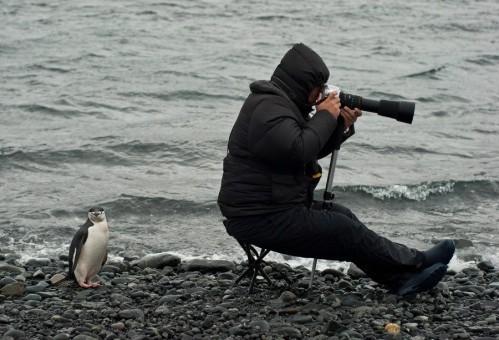 cocasse-pingouin.jpg