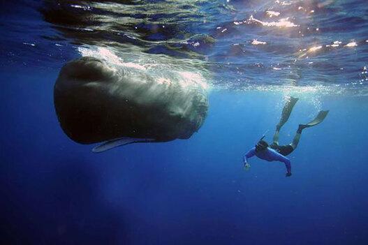 Sperm-whale-7