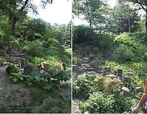 jardin zen 12