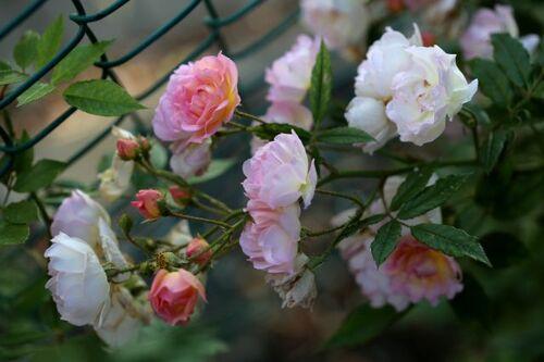 Un nouveau printemps