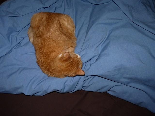Cannelle chat de Metz 5 mp1357 2010