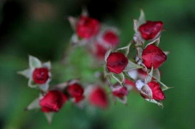 Un jour, une couleur : la vie en rouge