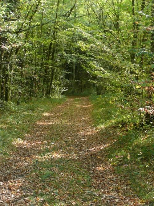 automne 2011