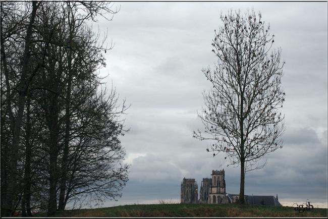 vues d'arbres