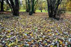 Parc Floral de Bordeaux 28 Novembre