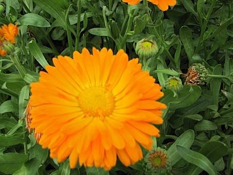 fleurs-4372.JPG