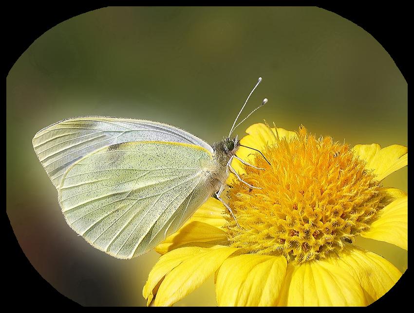 Mist fleur et papillon