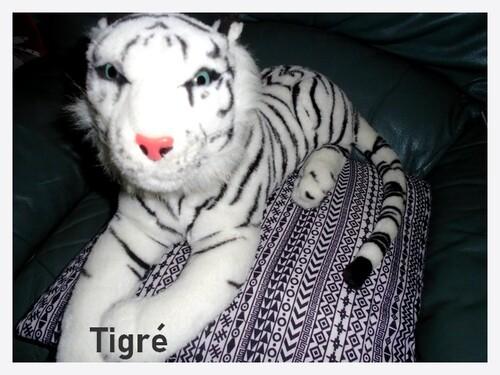 Tigresse vient de rejoindre les compagnons