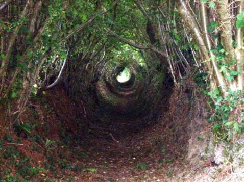 chemin_ombrag__th_ville