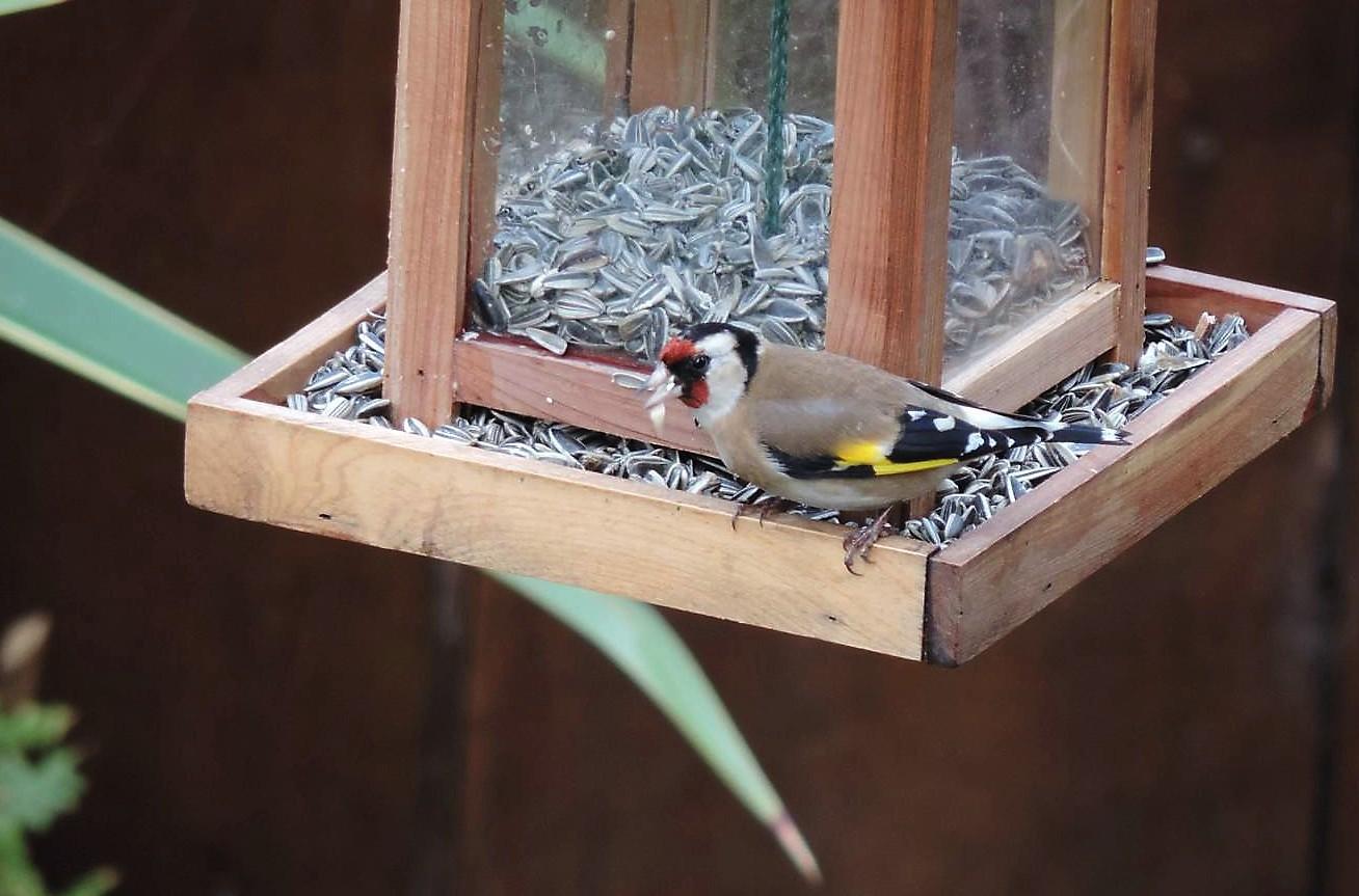 Recensement des oiseaux 2014