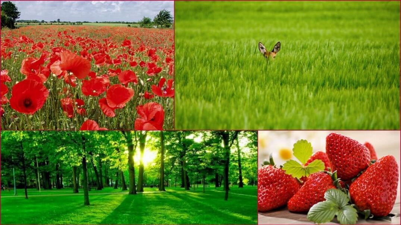 Signification des couleurs/rouge et vert
