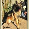 Junkos BA 2 (1)