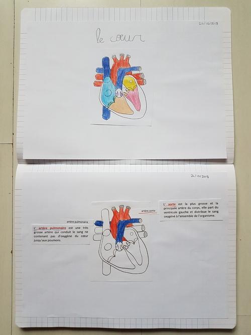 A la découverte du coeur