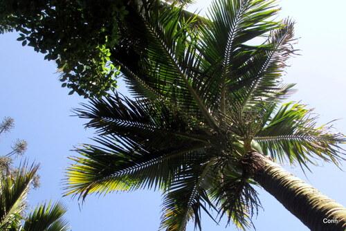 Palmier dan le ciel !