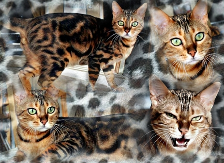 Didi8295753-bw-leopard-peau-arriere-plan-ou-la-texture-grande-resolution