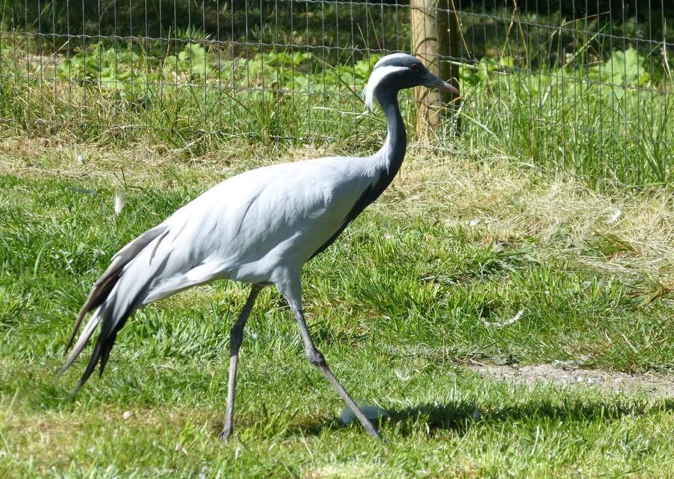 Zoo d'Amiens Métropole (suite)