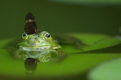 Confidances de papillon...