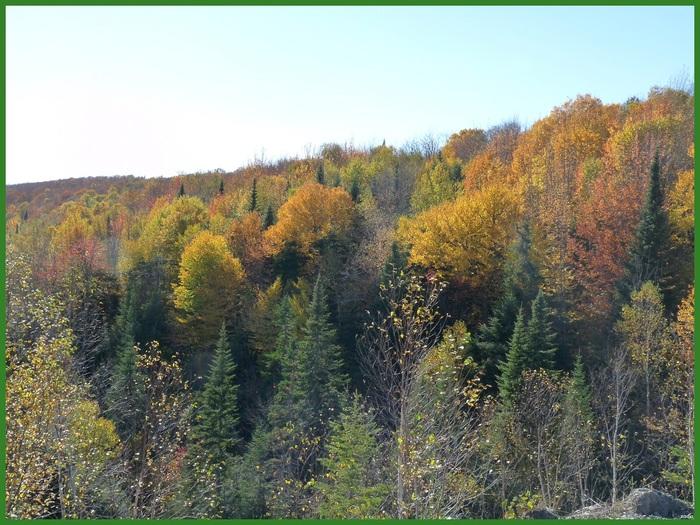 Paysages dans la forêt. (2)