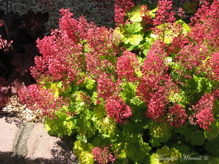 Colmar : Jardin paisible