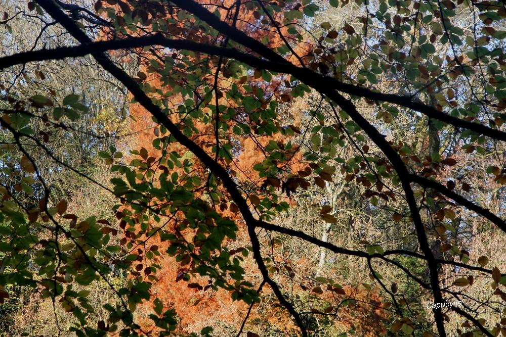 L'automne en 2 π r.