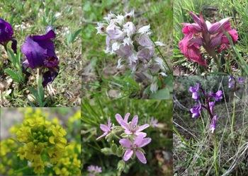 Iris et autres fleurs