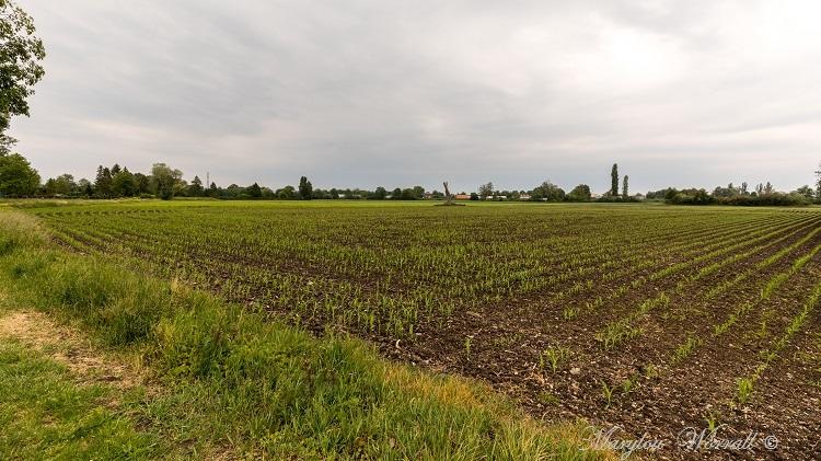 Souffelweyersheim (67) : Pagode ou Wat