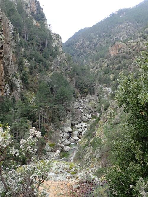 Les gorges du Tavignano 1