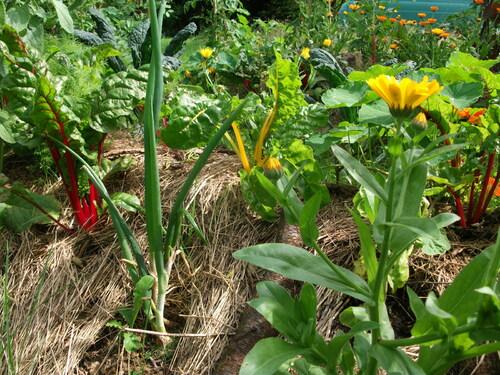 Le jardin, la jardinière