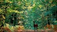 Résultat d'images pour forêt