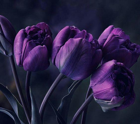 Virágok 2
