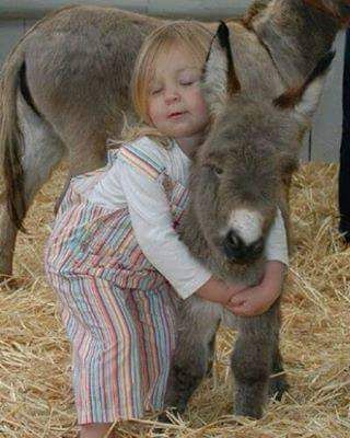 Donkey & precious girl.