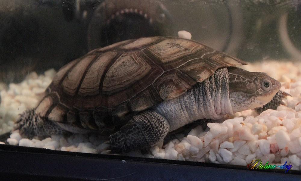 voici une des tortues de ma fille