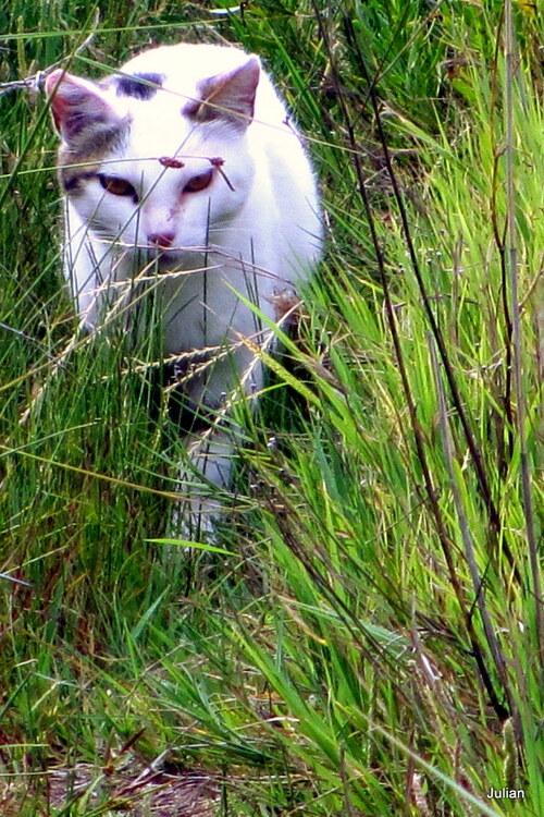 Un joli chat