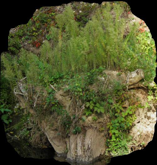 Tube branche souche végétaux