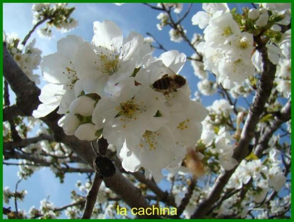 abeille-2013--10-.JPG