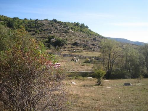 Départ des agneaux de la montagne : adieu Pyrénées Orientales!