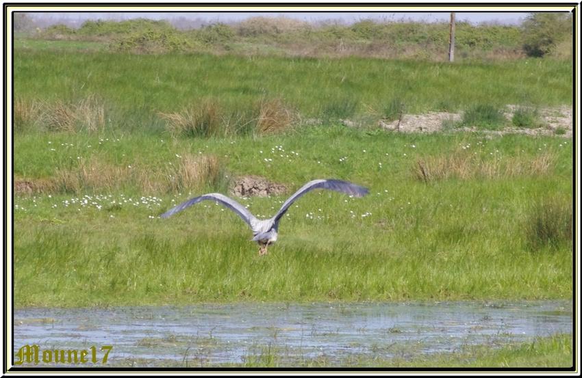 Balade dans la réserve de Moëze et les marais de Brouage