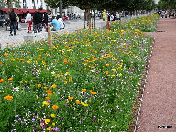 BELLECOUR VEGETAL2011 069 (42)