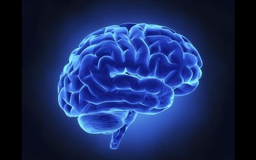 Le système glyphatique du cerveau