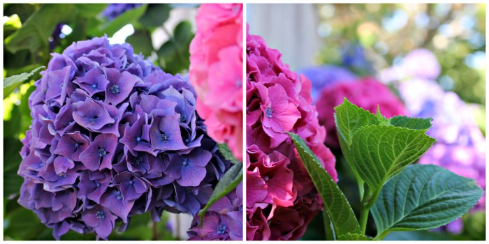 Feu d'artifice de fleurs